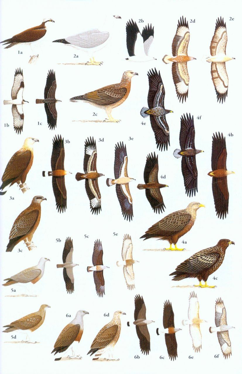 a guide to the birds of southeast asia craig robson